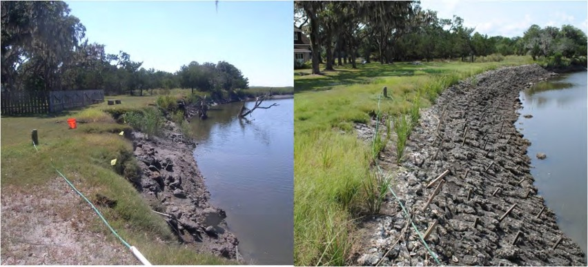 Ashantilly Site Pre-Living Shoreline Construction 2009 (Left ) and Post-Living Shoreline Construction 2010 (Right)